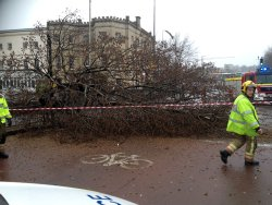 Fallen tree closes Bath Road