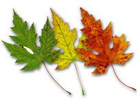 three leaves depicting seasons